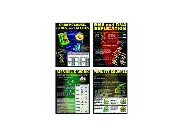 Dna & Heredity Poster Set