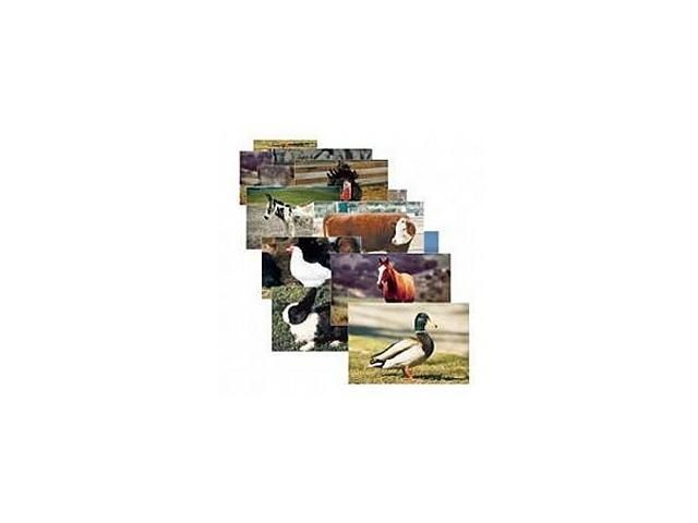 Farm Animal Posters (Set of 10)