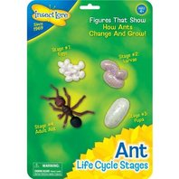 Insect Lore Life Cycle Stages Set: Ant