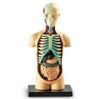 Learning Resources Human Body Model