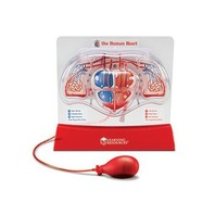"Learning Resources Pumping Heart Model, 12"" Length x 11"" Width x 5"" Depth"