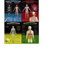 Teaching Poster Set: The Human Body; no. MC-P149