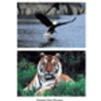 Wild Animal Poster Set