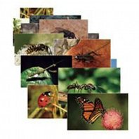 Insects Posters, Set Of 14