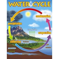 Water Cycle Chart; 17 x 22; no. T-38119