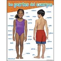 las partes del cuerpo (SP)