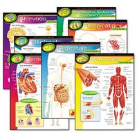 Trend Enterprises T38913 Learning Chart Combo Pack, The Human Body, 17w x 22h, 7/Pack