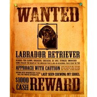 Wanted Labrador Retriever Tin Sign Pet Dog Lovers Poster Comedy Humor 31A