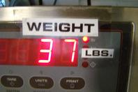 Zimmerman balance Lifting and Balancing Unit 100 lbs @ 100PSI 34624 BA010060