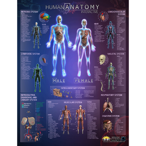 HUMAN ANATOMY INTERACT SMART CHART